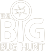 bbh-logo-white.png